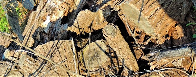 tips 1 Dead Wood